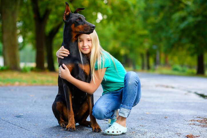How to Train a Doberman Puppy