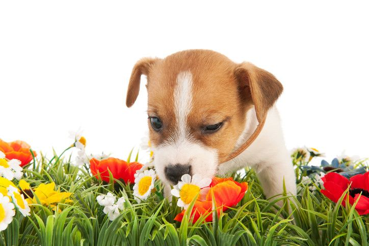 Calming Essential Oils for Dogs