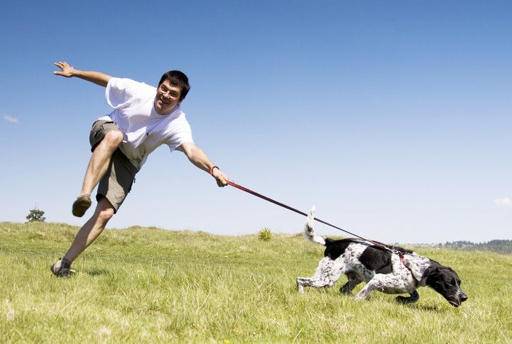How To Stop My Dog Running After Other Dogs