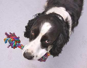 how to choose the best chew toys for your dog