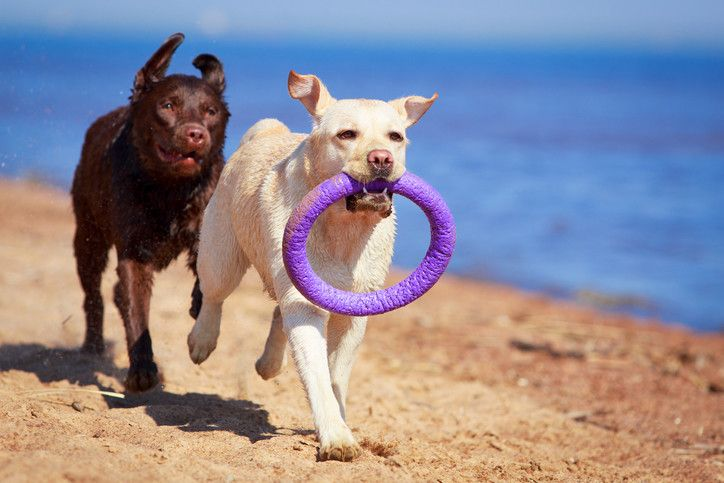 Best Chew Toys For Destructive Dogs