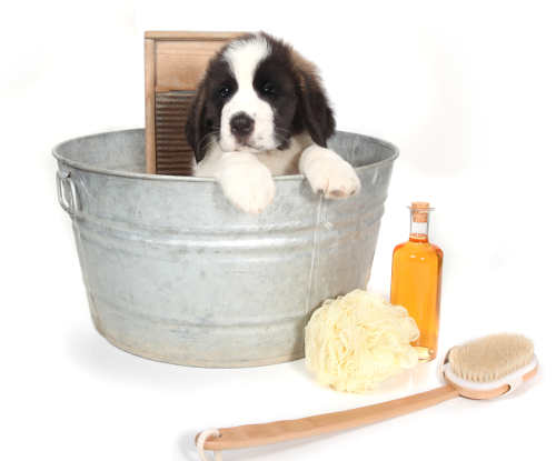Best Shampoo For Puppies