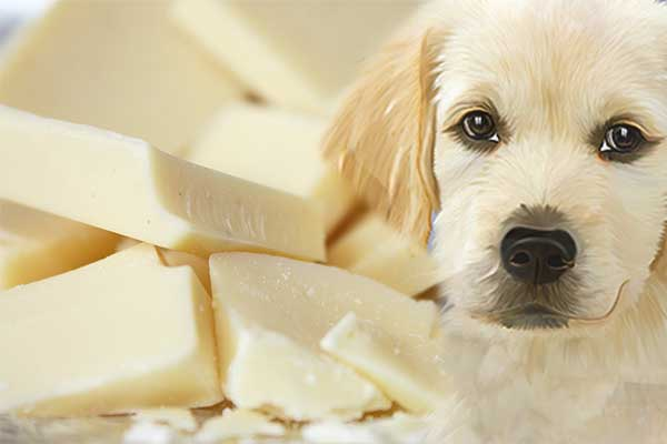 can dogs eat white chocolate