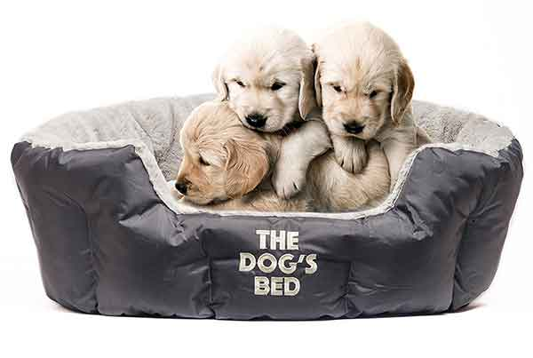 The Best Dog Beds For Small Dogs