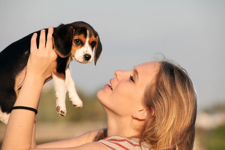 How to Train a Beagle Puppy