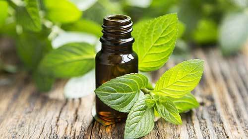 peppermint oil for dogs chronic stress