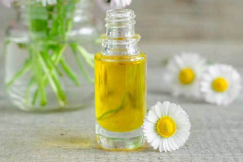 Roman Chamomile oil to help with dog anxiety