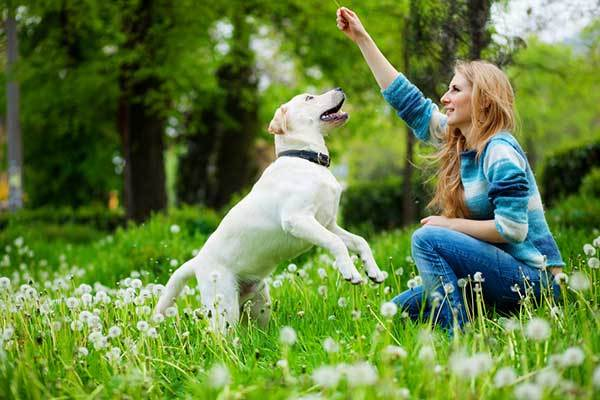 best calming essential oils for dogs