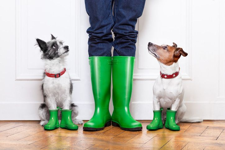 Best Hiking Boots for Dogs