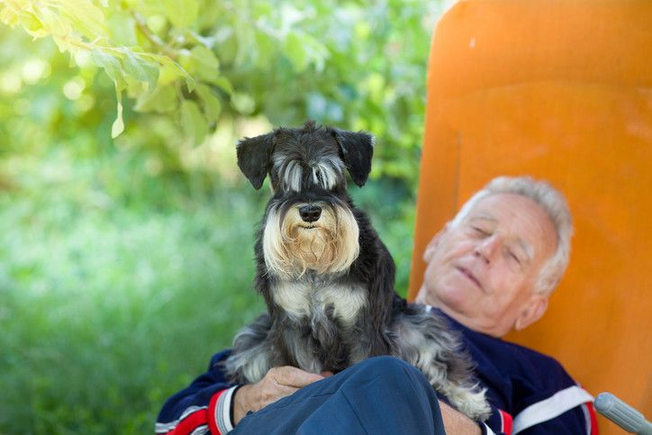 Best Therapy Dogs For Depression