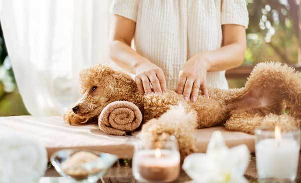 What essential oils are good to calm dogs?