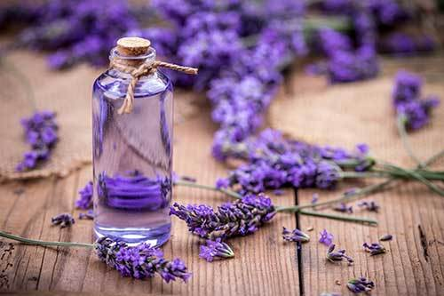 lavender essential oil to relax dogs