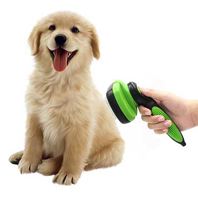 best dog brush guide