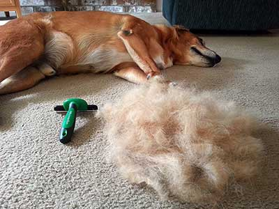 dog brush for shedding