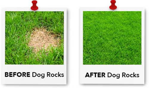 grass before after using dog rocks