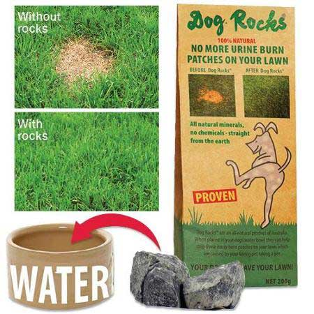 pee rocks for dogs