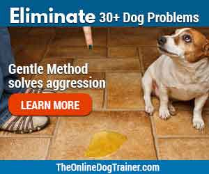 eliminate dog problems