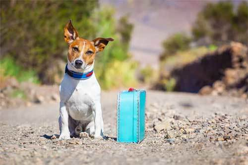 travel tips with dog