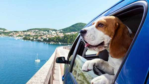 travel with your dog guide