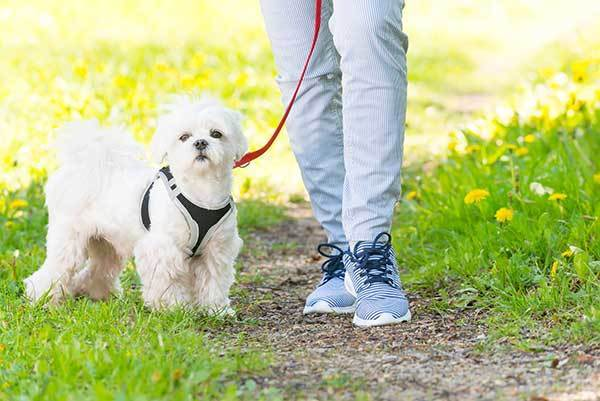 dog on leash with his owner