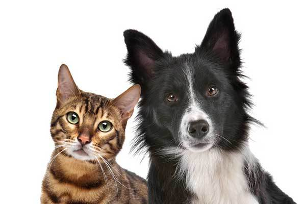 How Stop Dog Aggression towards Cats