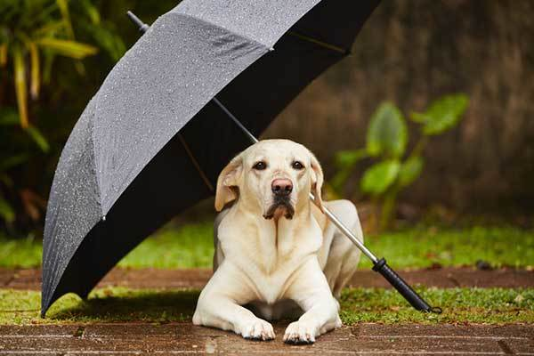 how to calm dog during thunderstorm natural way