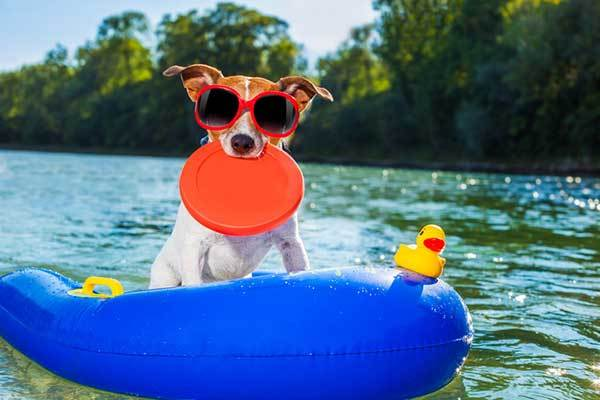 things your dog needs this summer