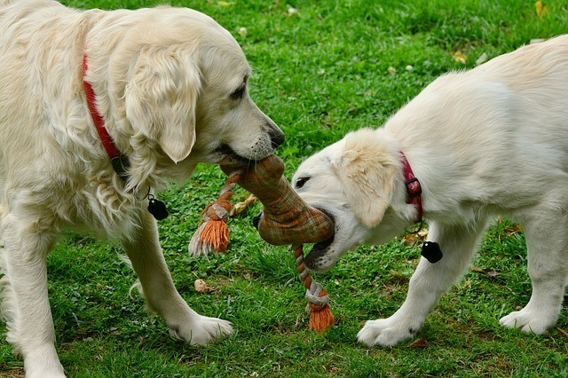 how to socialize dogs with other dogs