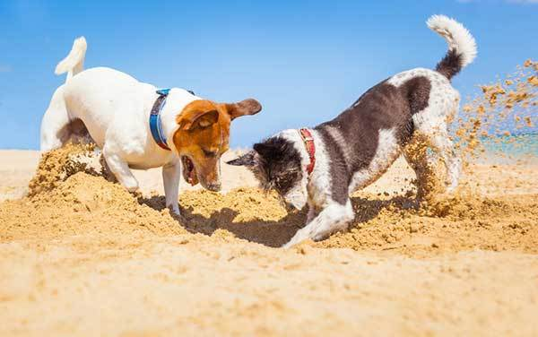tips to stop dog from digging