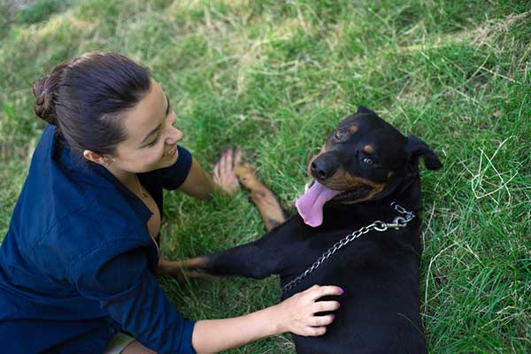 rottweiler dog on grass with owner