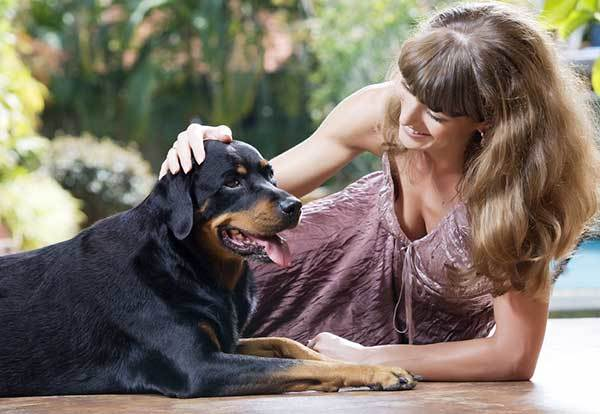 best ways to train rottweilers