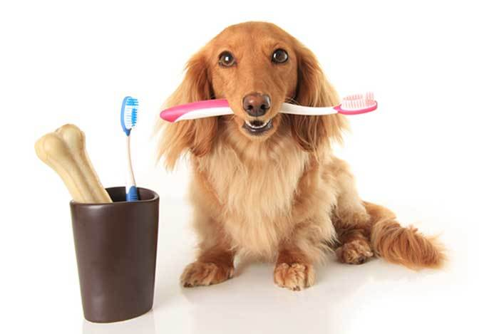 clean dogs teeth without toothbrush