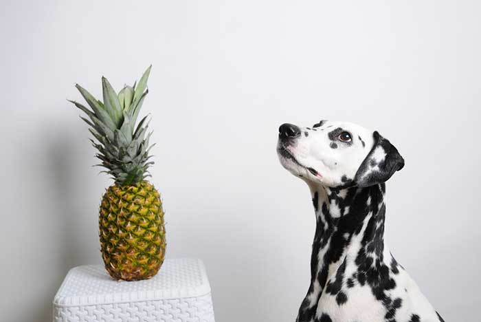 can dogs have pineapple?