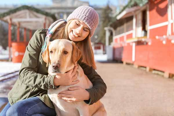 Labrador retriever dog with owner