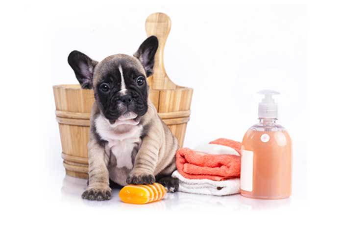 how to clean a dog without bathing