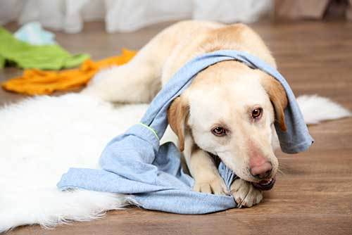 puppy proofing your house guide