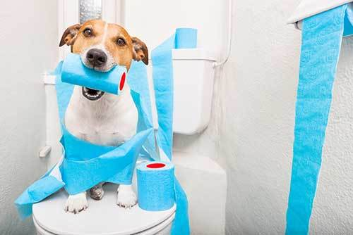 how to puppy proof your bathroom
