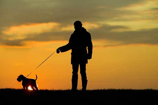 Keep your dog safe on evening walks