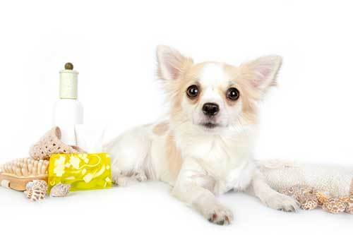 diffusing essential oils around dogs