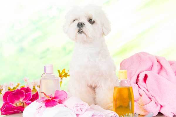 Are essential oils safe for dogs to smell?