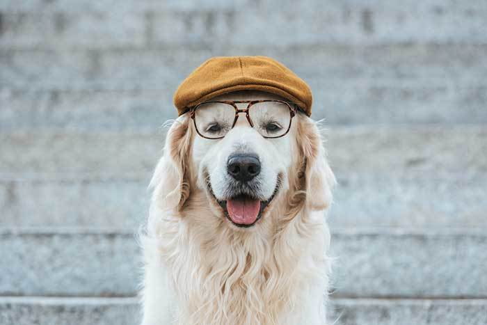 Make Your Dog More Intelligent