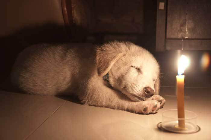 Are scented candles safe for dogs?