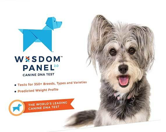 wisdom panel dog dna test full review