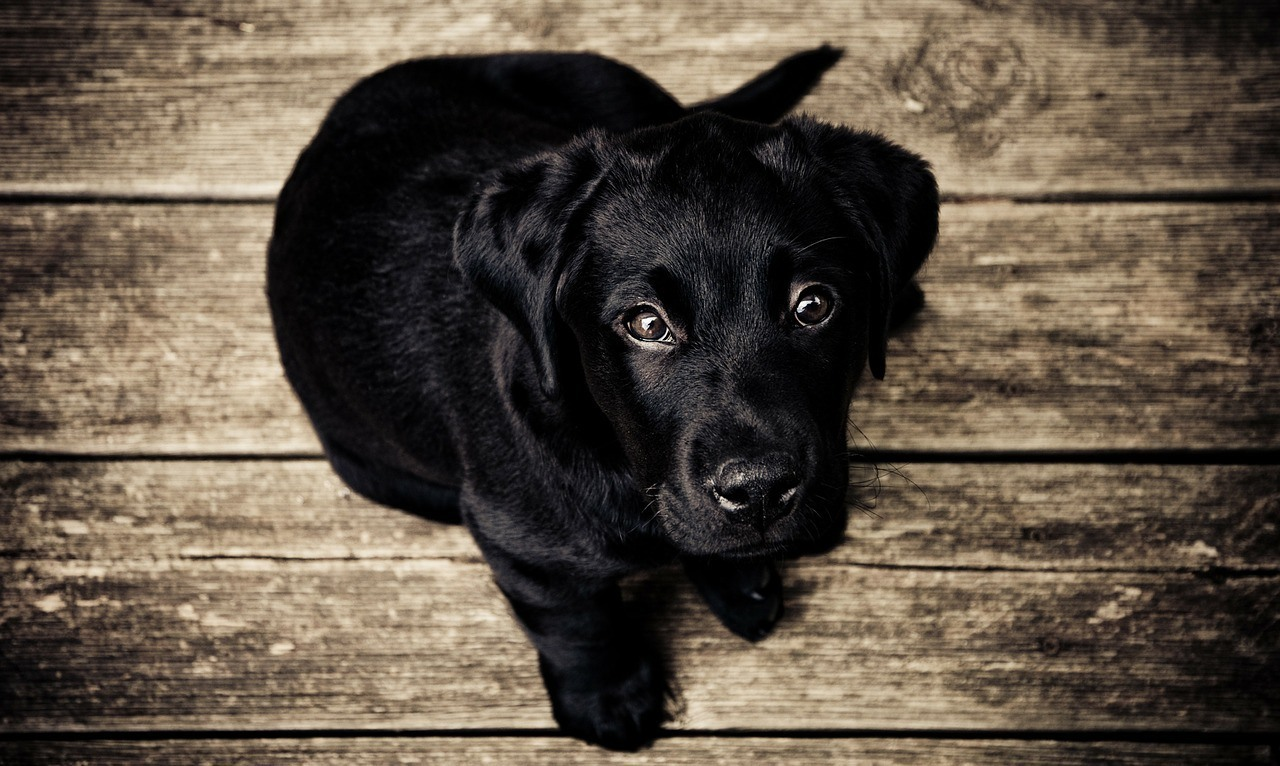 Ideas For Black Dog Names