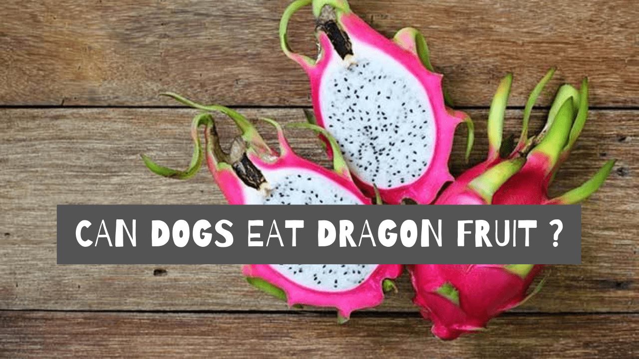 is dragon fruit bad for dogs?
