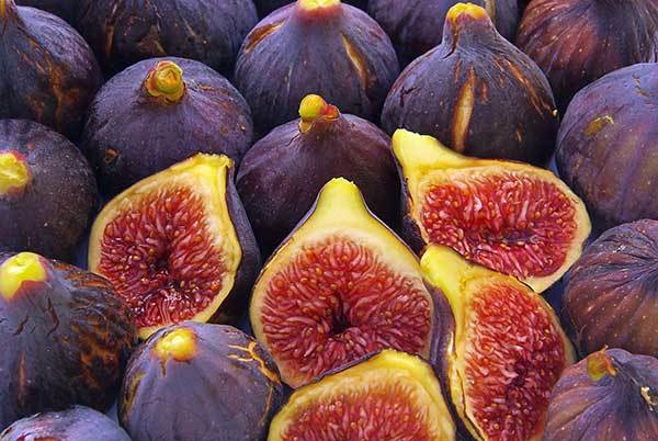 Are Figs Bad for Dogs?