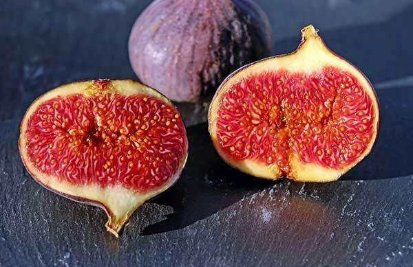 fig for dogs