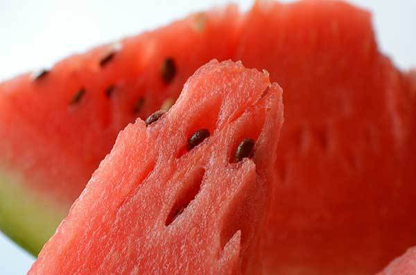 dogs and watermelon