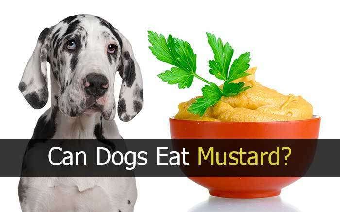 can dogs have mustard?