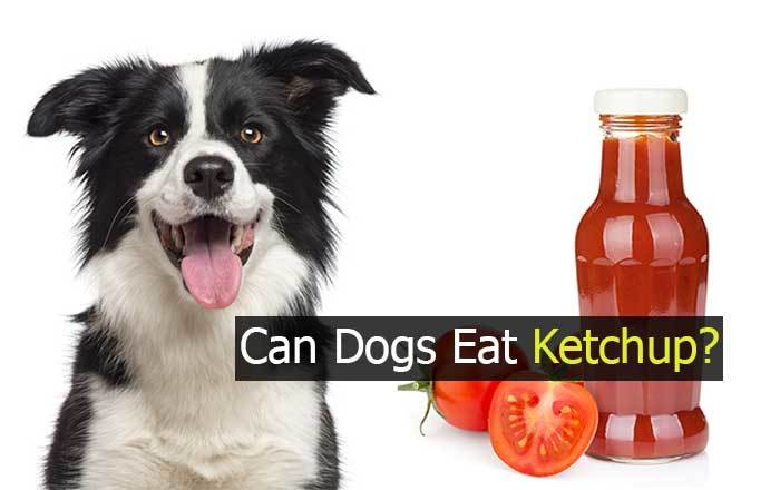 can dogs have ketchup?